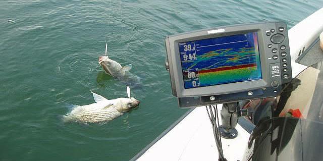 эхолот практик не показывает рыбу